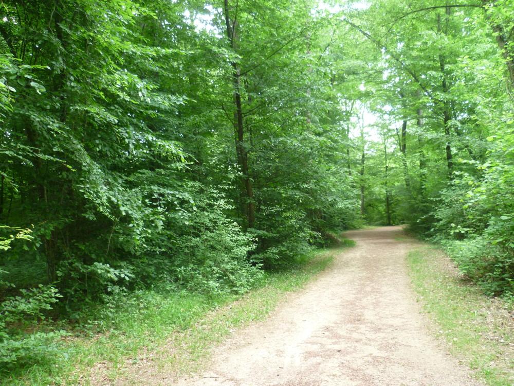 A31 exit 17 dog walk near Nancy, France - Image 3