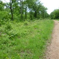 A31 exit 6 dog walk near Auberive, France - Image 3