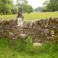 Tissington dog walk, Derbyshire - Image 13