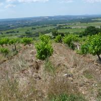 A7 exit 22 doggiestop in a wine village, France - Image 3