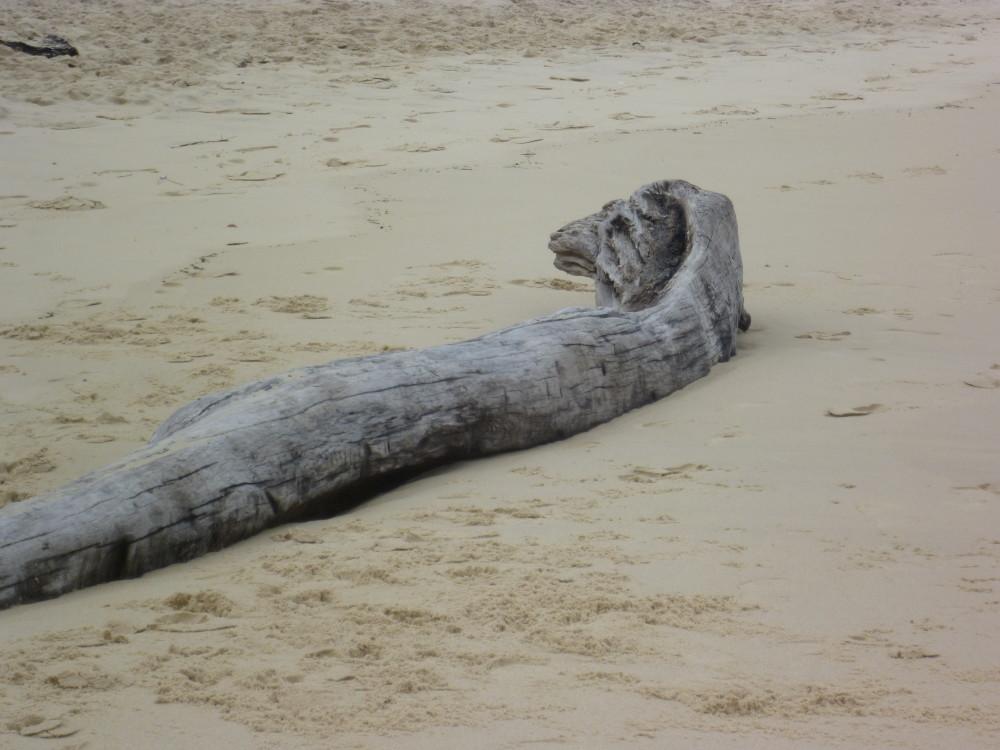 Dog-friendly beach near Arcachon, France - Image 2