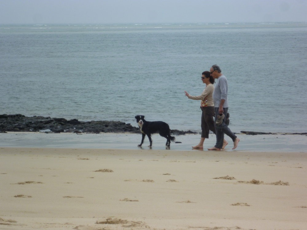 Dog-friendly beach near Arcachon, France - Image 3