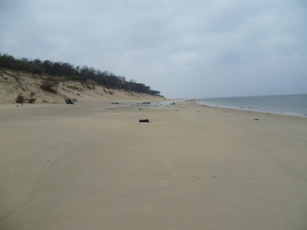 Dog-friendly beach near Arcachon, France - Image 4