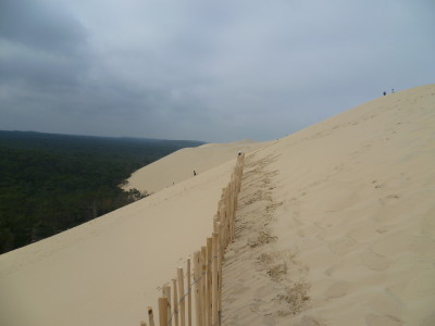 Atlantic dunes dog-friendly beach and walk, France - Driving with Dogs