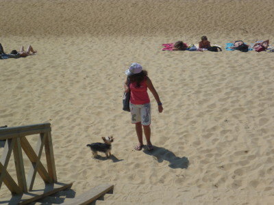 A63 exit 7 dog walk on the beach near Ondres, France - Driving with Dogs