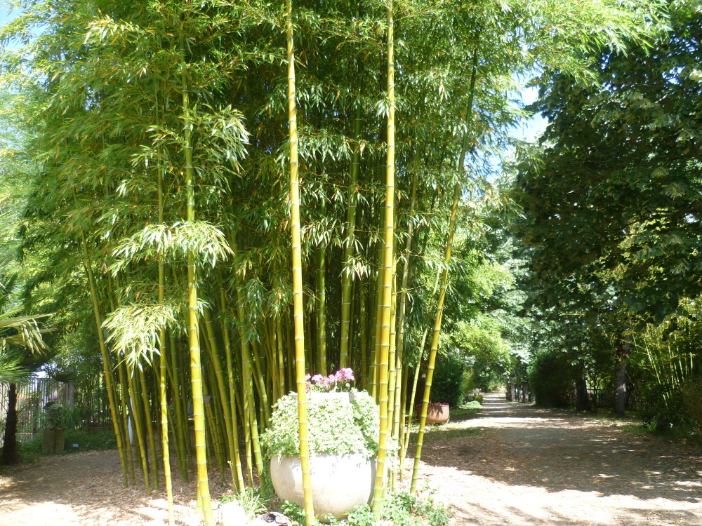 A62 Exit 9 Dog walk in a Bamboo Park, France - Image 2