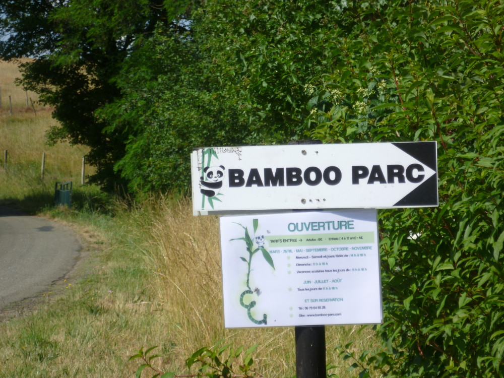 A62 Exit 9 Dog walk in a Bamboo Park, France - Image 5