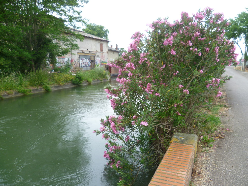 A62 Exit 11 a dog walk by the Garonne river, France - Image 2