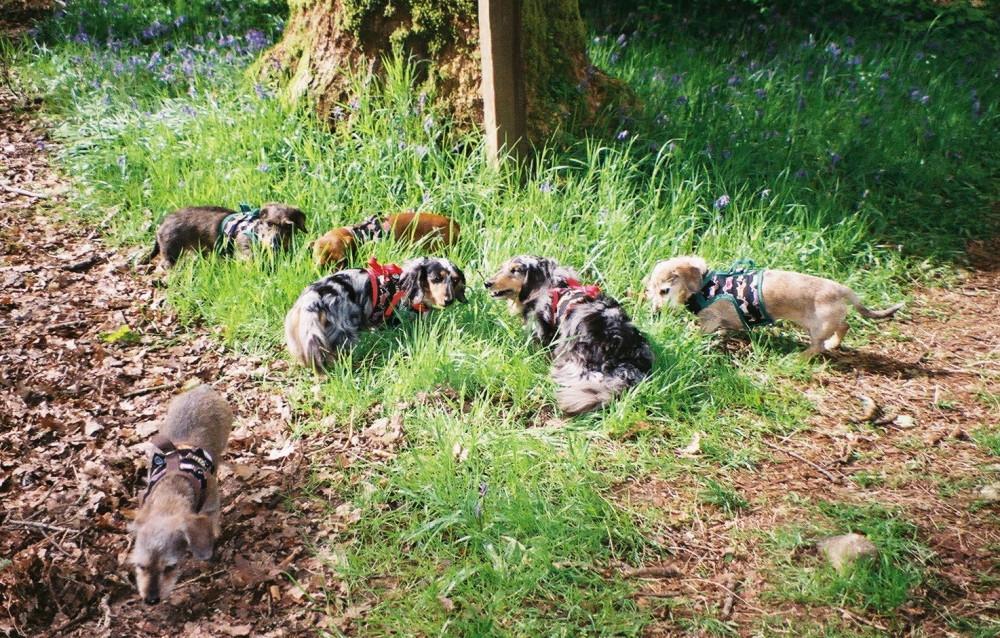 Tandle Hill dog walks, Lancashire - Image 4