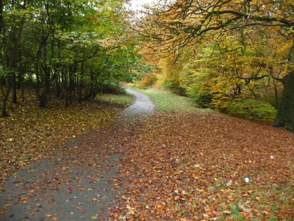 Tandle Hill dog walks, Lancashire - Image 5