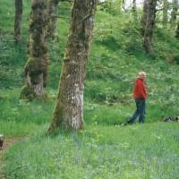 A82 dog walk in Invermoriston, Scotland - Dog walks in Scotland