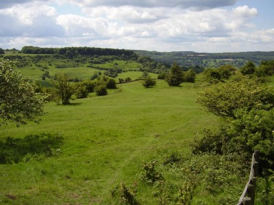 M5 Junction 11A dog walk near Cheltenham, Gloucestershire - Driving with Dogs