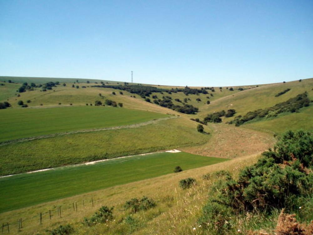 Castle Hill National Nature Reserve dog walk, East Sussex - Dog walks in Sussex
