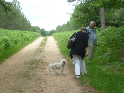 A28 exit 25 dog walk near Berce, France - Driving with Dogs