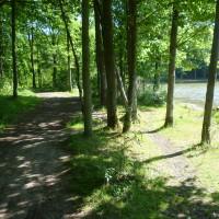 A11 Exit 1 dog walk on the Golden Pond, France - Image 5