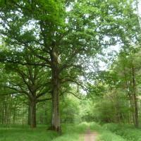 Rambouillet forest dog walks, France - Image 2