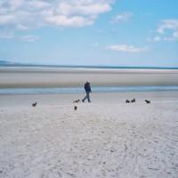 A96 dog-friendly beach in Nairn, Scotland - Dog walks in Scotland