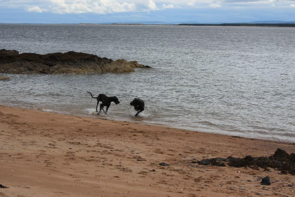 Carnoustie dog-friendly beach and dog walk, Scotland - Dog walks in Scotland