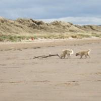 A71 dog-friendly beach in Irvine near Kilmarnock, Scotland - Dog walks in Scotland