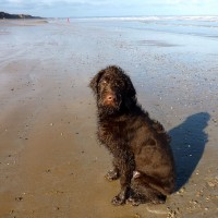 Skipsea to Hornsea dog walk, Yorkshire