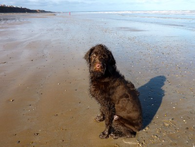 Skipsea to Hornsea dog walk, Yorkshire - Driving with Dogs