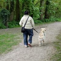 Lotherton Hall dog walk, West Yorkshire - Dog walks in Yorkshire