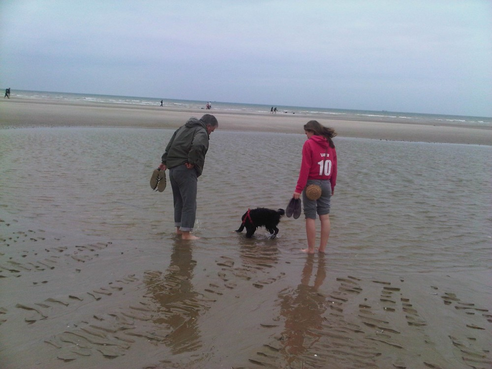 Merlimont Plage dog-friendly beach, France - Image 1