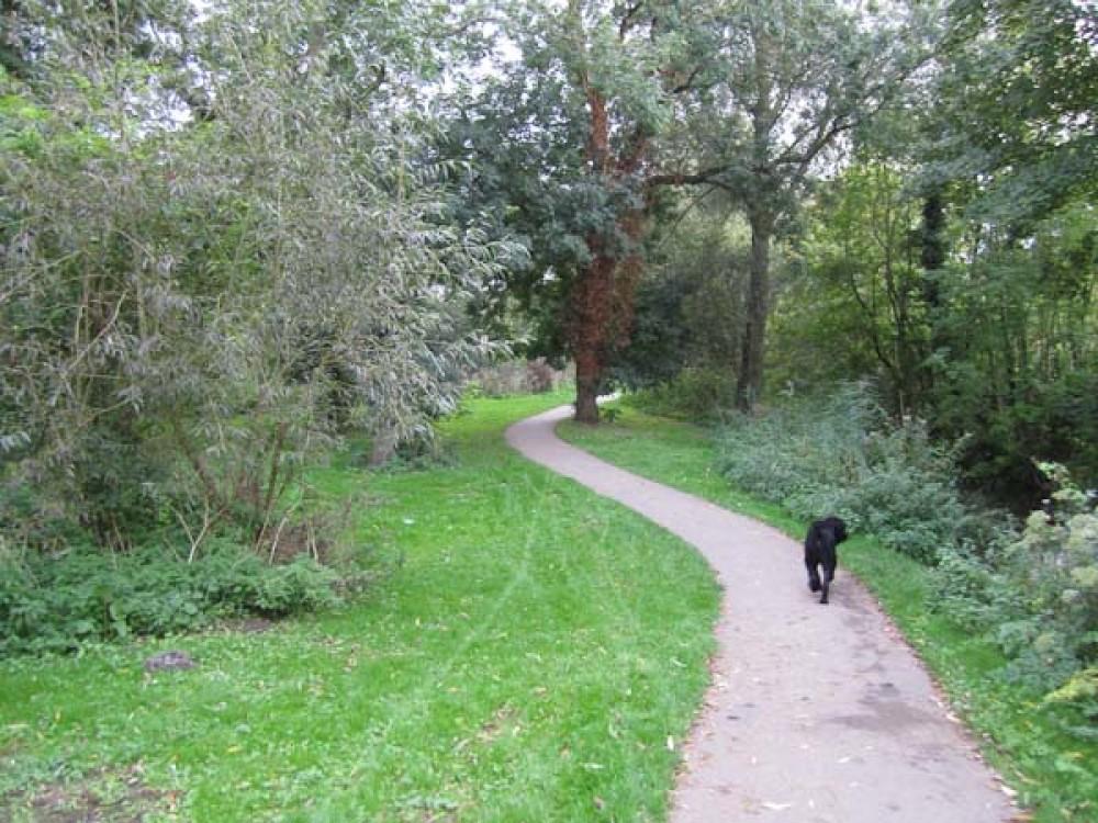 Newbury Creek, Berkshire - Berkshire dog walk