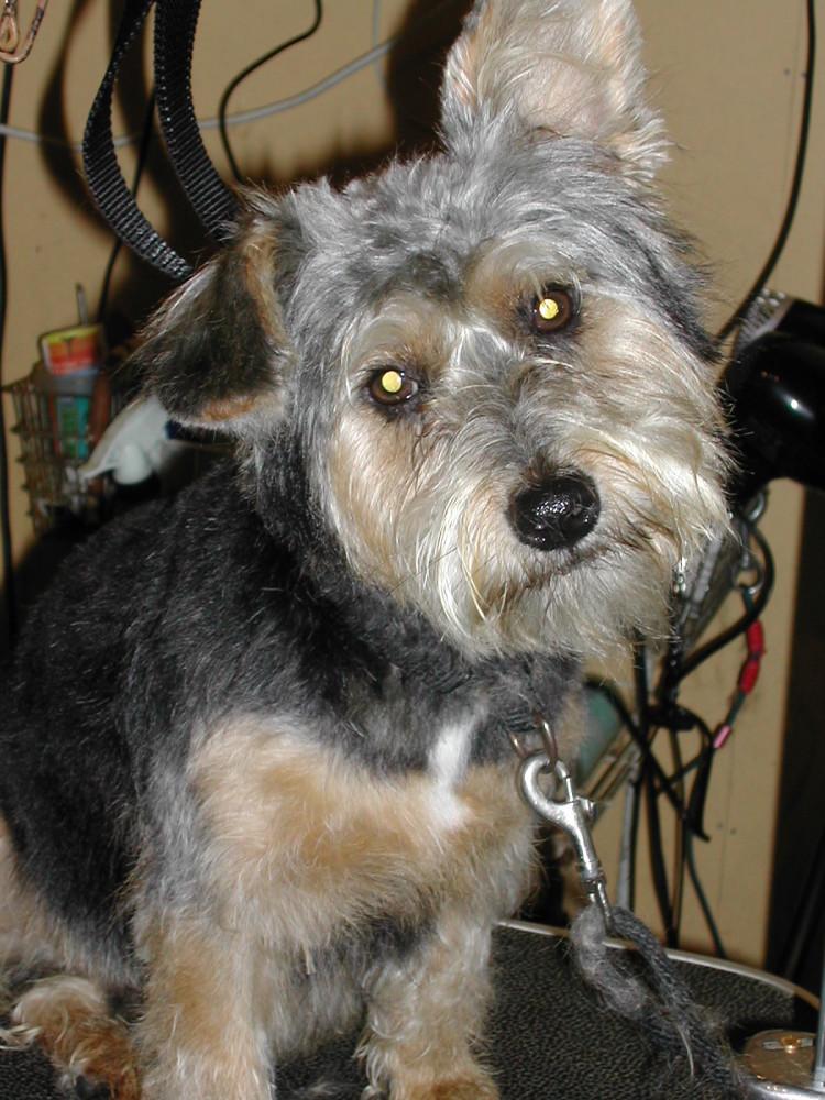GRRRoomers. Dog grooming by Ali, Norfolk - Image 1