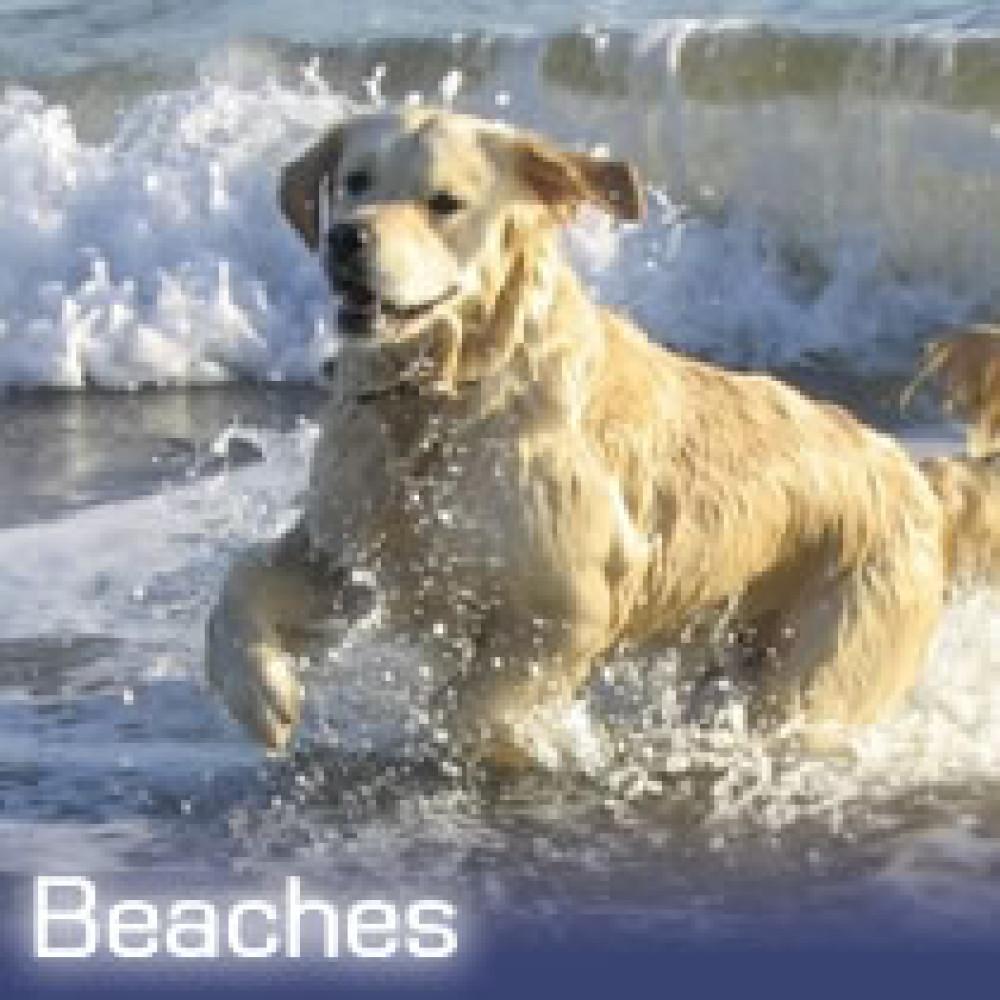 Sandyhills dog-friendly beach, Scotland - Dog walks in Scotland