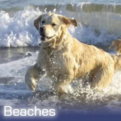 Sandyhills dog-friendly beach, Scotland - Driving with Dogs