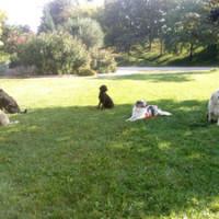 Dog walk at the Parc Jean Perdrix, Valence, France - Image 2