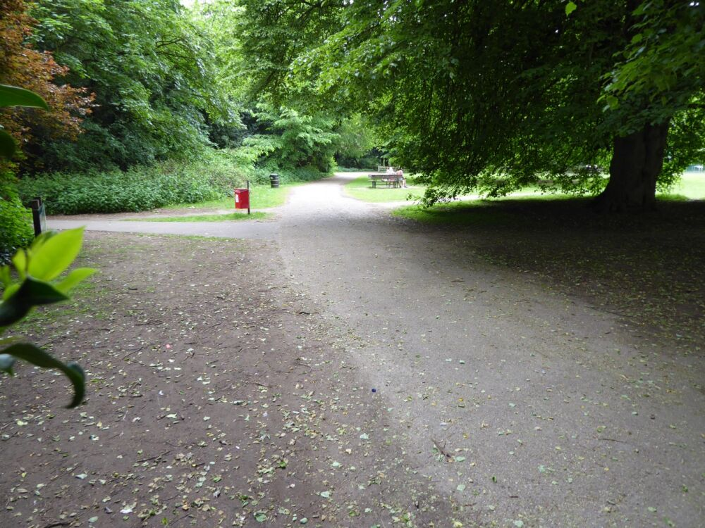 Hartsholme Country Park dog walk, Lincolnshire - Dog walks in Lincolnshire