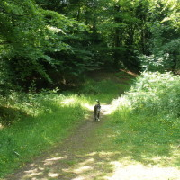 Dog walk with a view in the Blackdown Hills, Somerset - Dog walks in Somerset