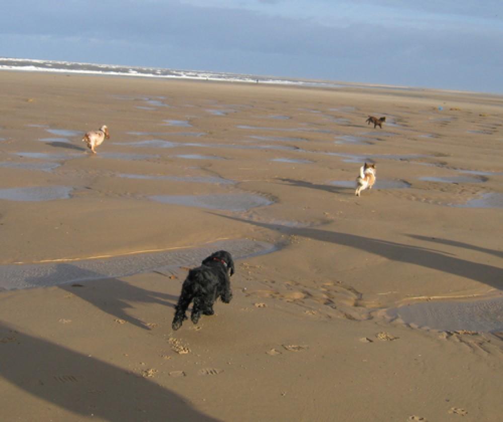 Holkham dog-friendly beach, Norfolk - Dog walks in Norfolk