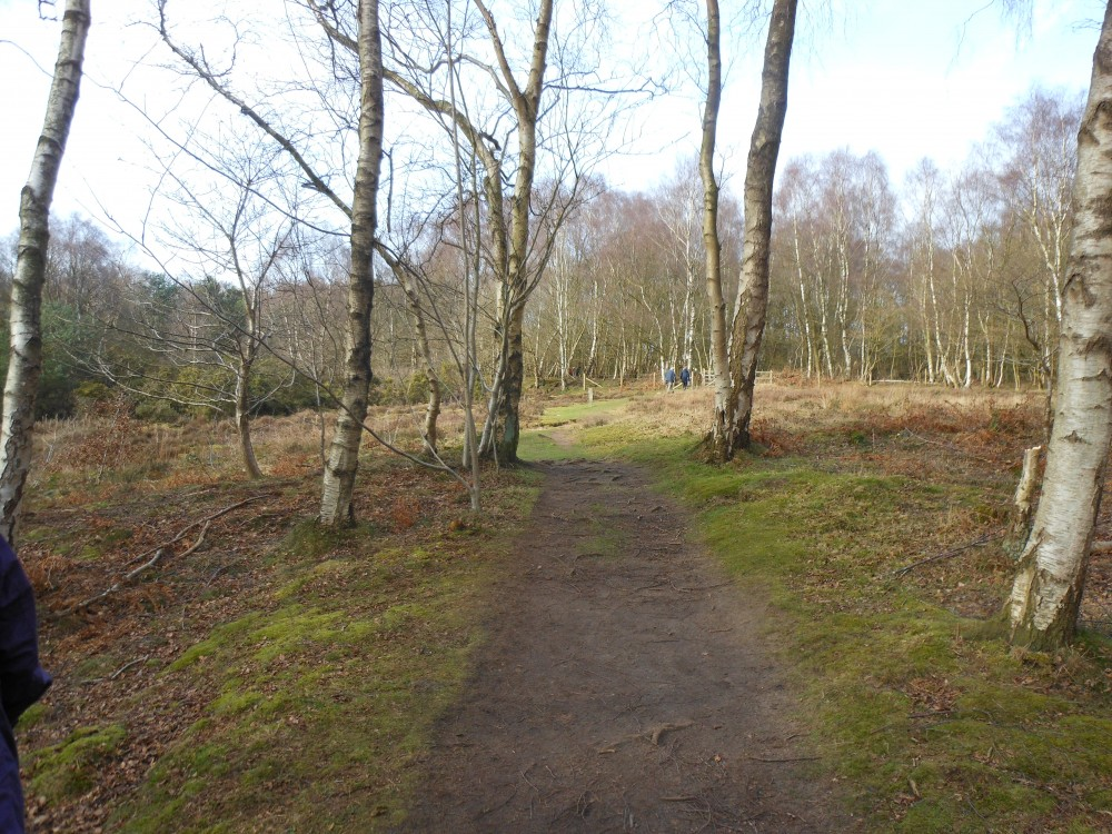Little Budworth Country Park dog walk, Cheshire - Dog walks in Cheshire