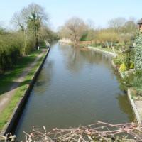 M40 Junction 16 dog-friendly pub and dog walk, Warwickshire - Dog walks in Warwickshire
