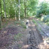Ballinspittle dog walk, RoI - Dog walks in Ireland