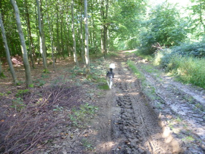 Ballinspittle dog walk, RoI - Driving with Dogs