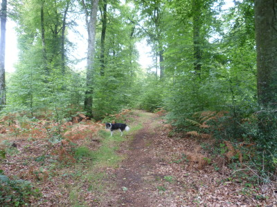 National forest dog walk near Bazouges, France - Driving with Dogs