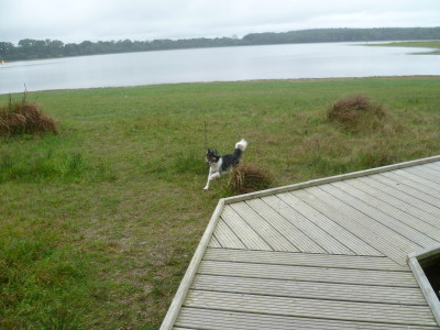 Dog walk in France near Feins, France - Driving with Dogs