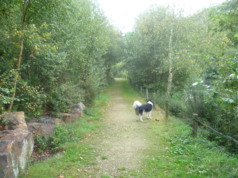 Mont Castre dog walk, Cherbourg Peninsula, France - Image 4
