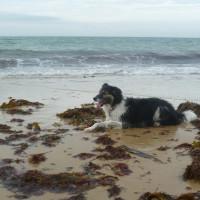 Cap de Carteret dog walk, Cherbourg Peninsula, France - Image 3