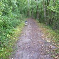 A dog walk in St Suliac, France - Image 3