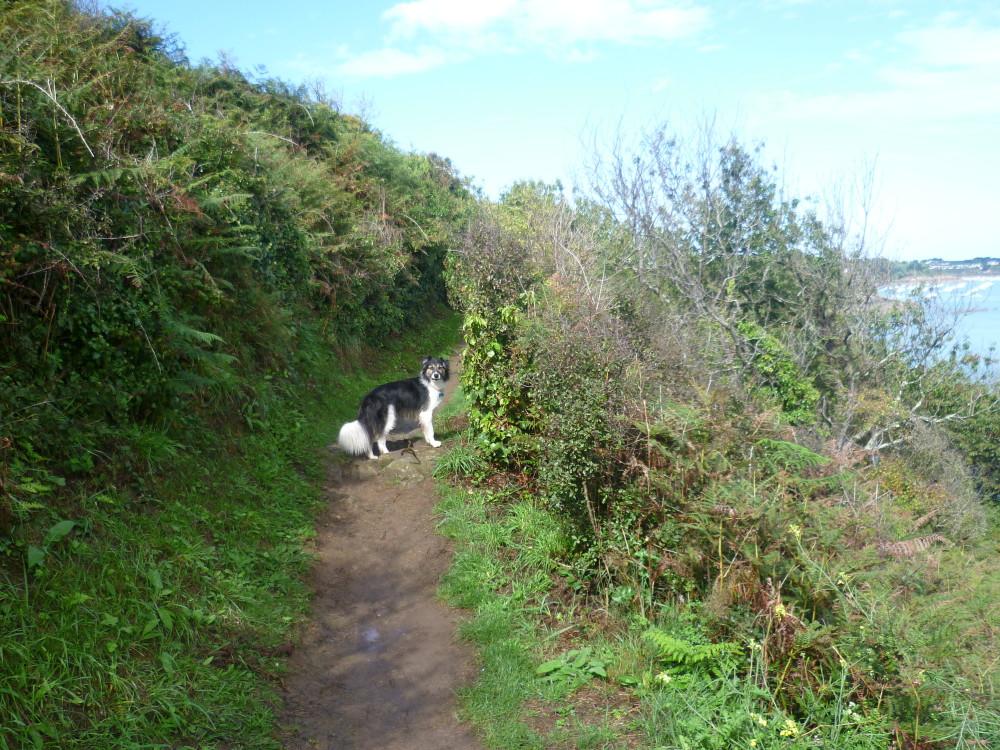Cancale Coast Path walk with the dog, France - Image 2