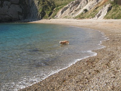 Durdle Door dog-friendly beach, Dorset - Driving with Dogs