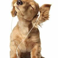 carletondogwalking - Driving with Dogs
