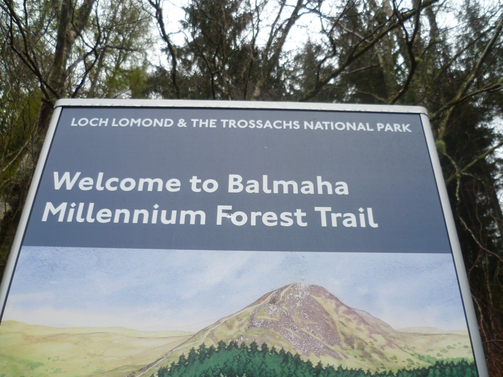 Loch Lomond dog walk at Balmaha, Scotland - Dog walks in Scotland