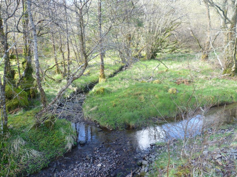 Glen Nant dog walk, Scotland - Dog walks in Scotland
