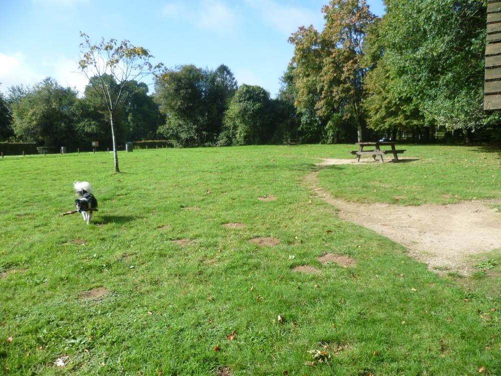 Bagnoles de l'Orne dog walk, France - Image 1